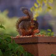 Munching Squirrel Art Print
