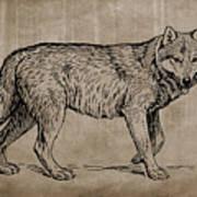 Gray Wolf Timber Wolf Western Wolf Woods Texture Art Print