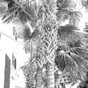 Grayscale Palm Trees Pen And Ink Art Print