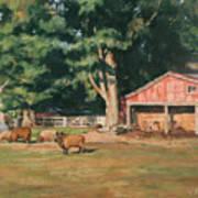 Grazing Sheep Art Print