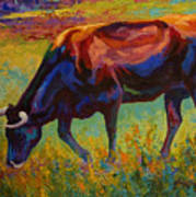 Grazing Texas Longhorn Art Print