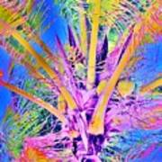 Great Abaco Palm Art Print