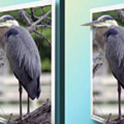 Great Blue Heron - Gently Cross Your Eyes And Focus On The Middle Image Art Print