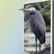 Great Blue Heron - Red-cyan 3d Glasses Required Art Print