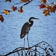 Great Blue Heron At Shores Of King's Mountain Point Art Print