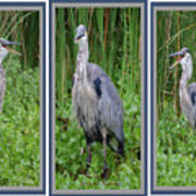 Great Blue Heron Collage Art Print