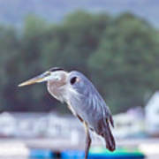 Great Blue Heron On Keuka Lake Horizontal Pano Art Print