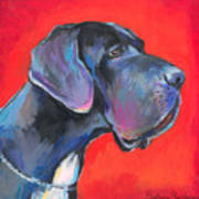 Great Dane Painting Art Print by Svetlana Novikova