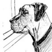 Great Dane Waiting Art Print