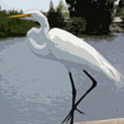 Great Egret    Ardea Alba Art Print