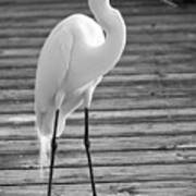 Great Egret On The Pier - Black And White Art Print