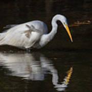 Great Egret Staring At His Reflection Art Print