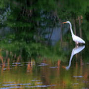 Great Egret Summer Pond Art Print