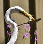 Great Egret With Lizard Who Is Holding Onto Wood Art Print