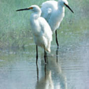 Great Egrets Art Print