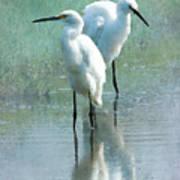Great Egrets Print by Betty LaRue