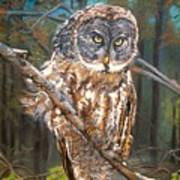 Great Grey Owl 2 Art Print