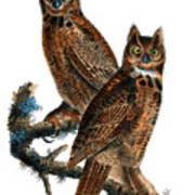 Great Horned Owl Audubon Birds Of America 1st Edition 1840 Royal Octavo Plate 39 Art Print