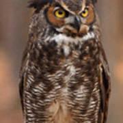 Great Horned Owl Digital Oil Art Print