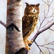 Great Horned Owl In Birch Art Print