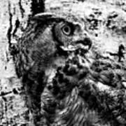 Great Horned Owl In Black And White Art Print