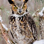 Great Horned Owl Nature Wear Art Print