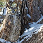 Great Horned Owl On Snowy Branch Art Print