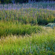 Great Marsh Grass Art Print