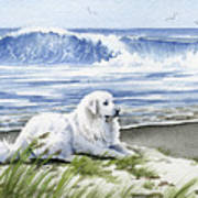 Great Pyrenees At The Beach Art Print