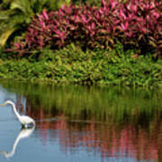 Great White Egret Hunting In A Pond In Mexico With Iguana And Re Art Print