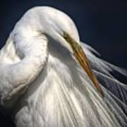 Great White Egret Print One Art Print