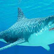 Great White Shark Undersea Art Print