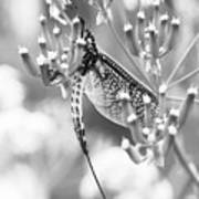Great Wings  Black And White Dragonfly Art Print