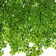 Green #001 Art Print