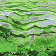 Green Algae Patterns On Exposed Rock At Low Tide, Gros Morne National Park, Ontario, Canada Art Print
