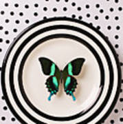 Green And Black Butterfly On Plate Art Print