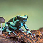 Green And Black Poison Dart Frog Art Print