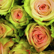 Green And Pink Rose Bouquet Art Print