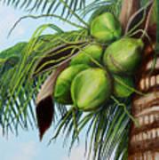 Green Coconuts- 01 Art Print