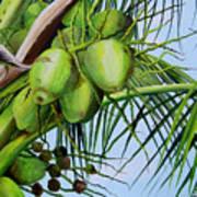Green Coconuts-02 Art Print