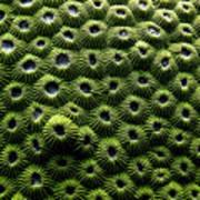 Green Coral Art Print