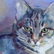 Green Eyed Tabby - Thomasina Print by Kimberly Santini