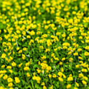 Green Field Of Yellow Flowers 2 1 Art Print