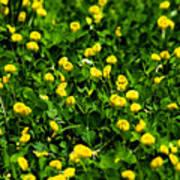 Green Field Of Yellow Flowers 4 Art Print