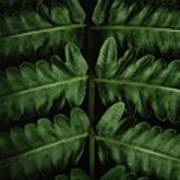 Green Foilage Of Indonesia Art Print