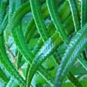 Green Forest Fern Fronds Art Prints Baslee Troutman Art Print