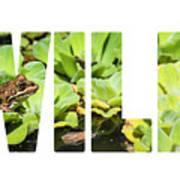 Green Frog In A Wetland Art Print