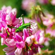 Green Grasshopper On Pink Flowers Art Print