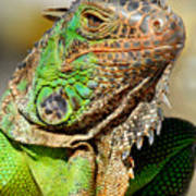 Green Iguana Series Art Print