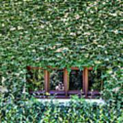 Green Ivy Window  Art Print